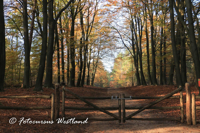 Herfstfotografie workshop in Clingendael